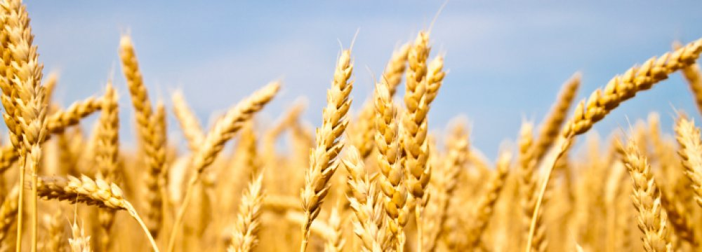 World's 11th Biggest Wheat Producer