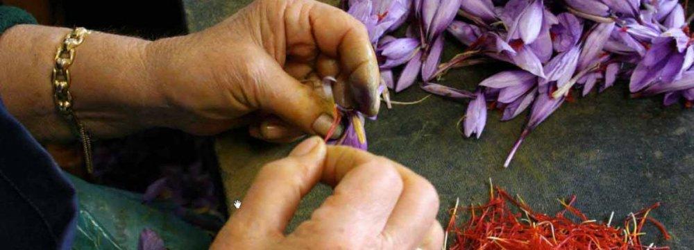 Saffron Exports Rise