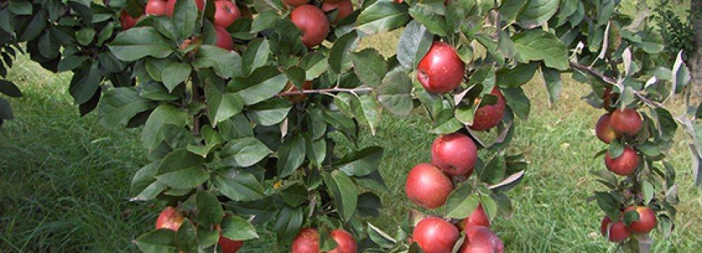 Horticulture Diversity