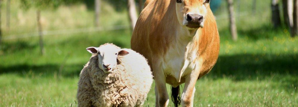 Farmed Animals Valued at $31b
