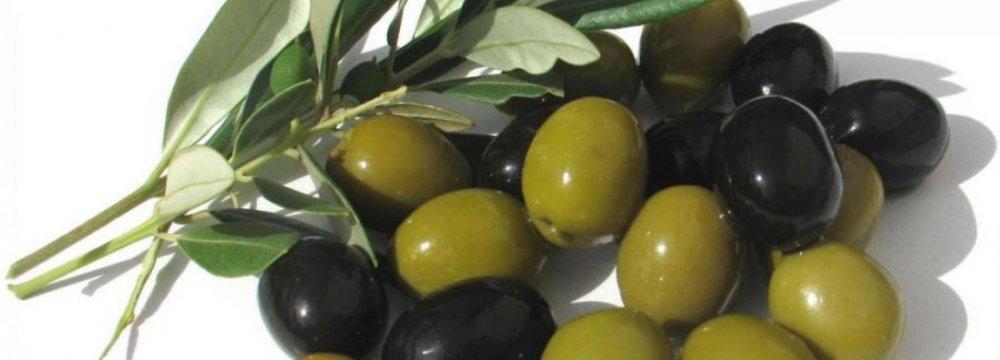Olive  Bumper Crop