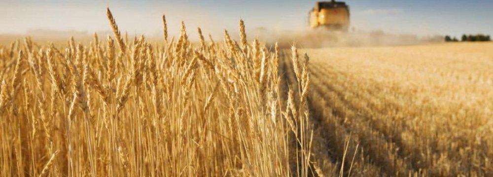IME's Bustling Agricultural Trading Floor