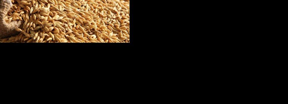 Opportunities in Barley Malt Industry