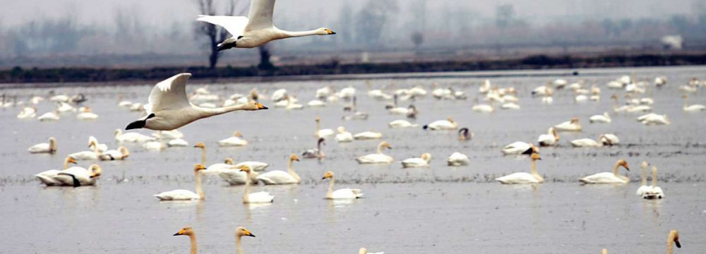 'Let's Watch Birds, Not Kill' Campaign