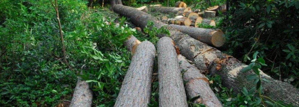 Tree Felling Continues Despite Heavy Penalties