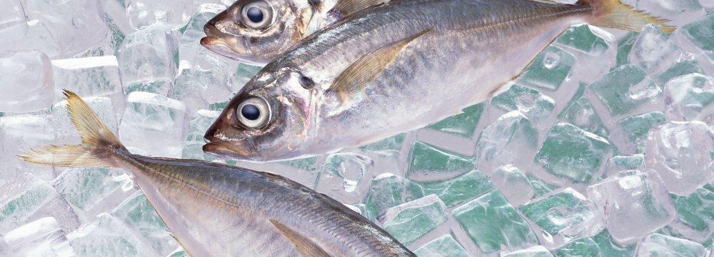 Vet Body Bans Open Fish Sales