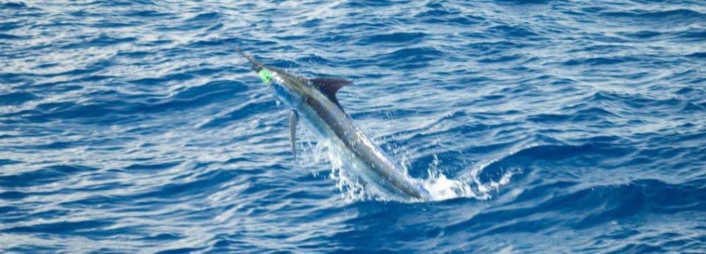Caspian Fish Safe to Eat