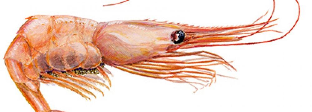 Shrimp Production