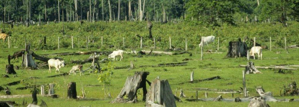 Amazon Deforestation Rising
