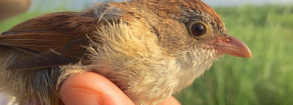 'Extinct' Bird Rediscovered