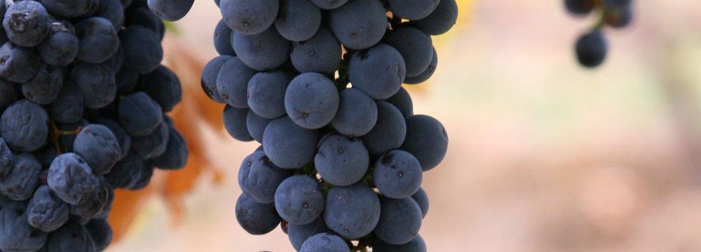 Grapes in Rituals
