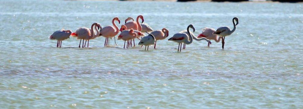 Migrating Birds Fly to Arak