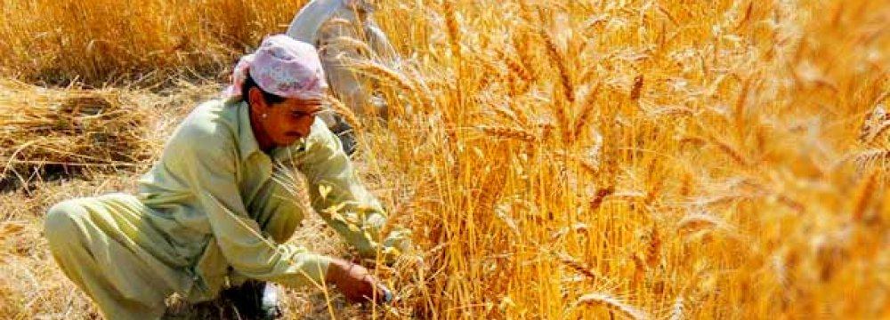 Wheat Export Outlook Bearish