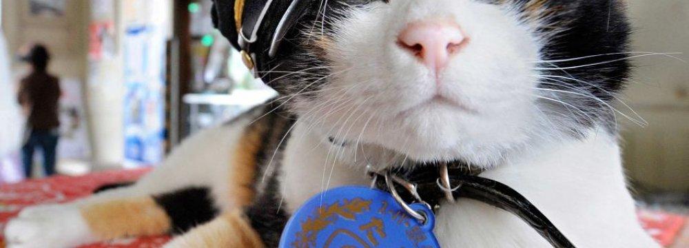Japanese Mourn Stationmaster Cat