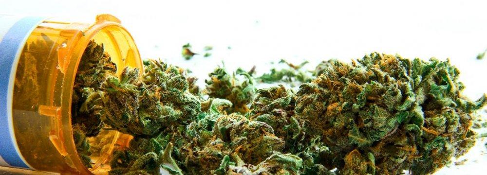 Marijuana May Treat Migraine