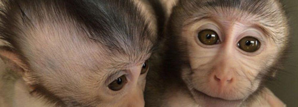 Monkeys With Autism Gene