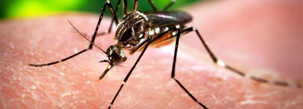 Warning Over Zika Virus