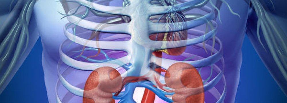 Iran Tops in ME Kidney Transplants