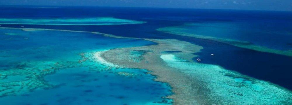 Great Barrier Reef Kept Off Endangered List