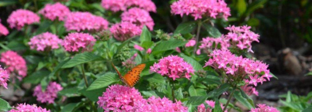 Biodiversity Limits Disease Outbreaks