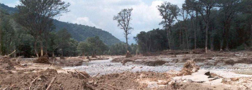 Deforestation Still Causing Concern