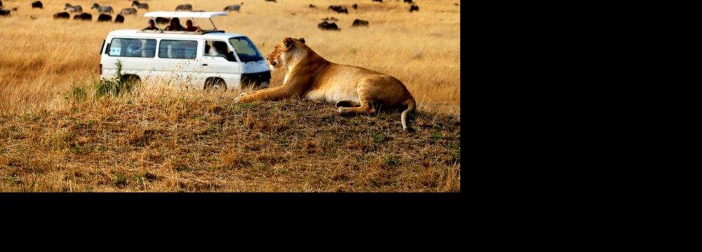 Ecotourism Threatens  Wildlife Survivability