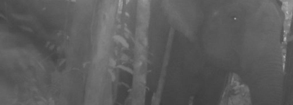 Rare Cambodian Elephant Footage Raises Hopes