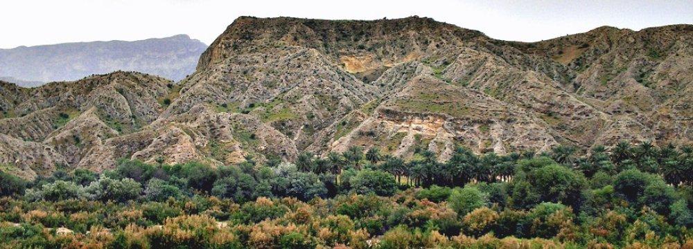 Bushehr Forest Dying