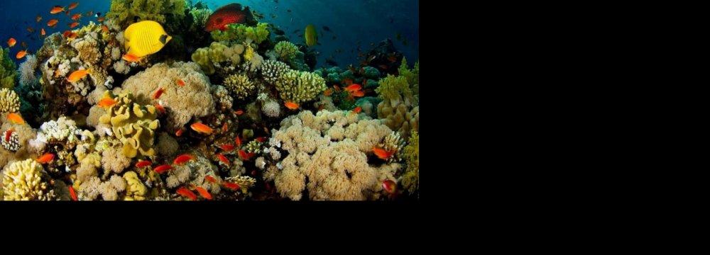 Marine Population Halved in 45 Years