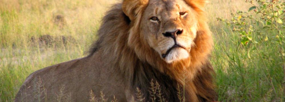 Zimbabwe Seeking US Dentist Accused of Poaching