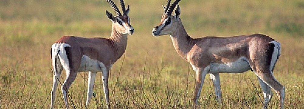 Jail, Fine for Gazelle Poacher