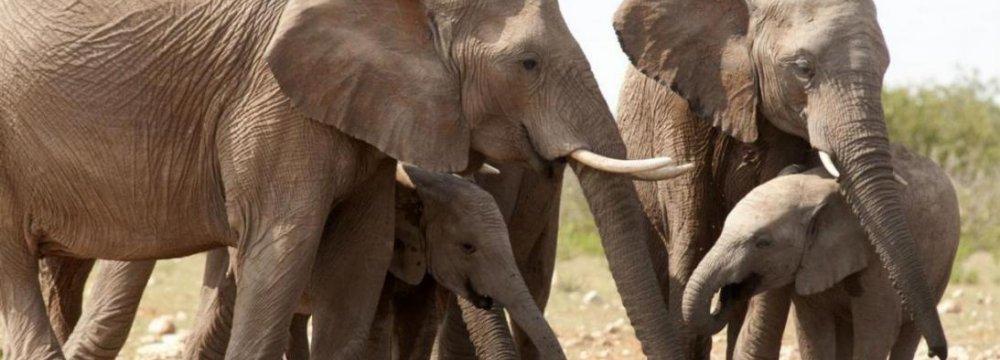 DOE Hails UN Resolution on Wildlife Crimes