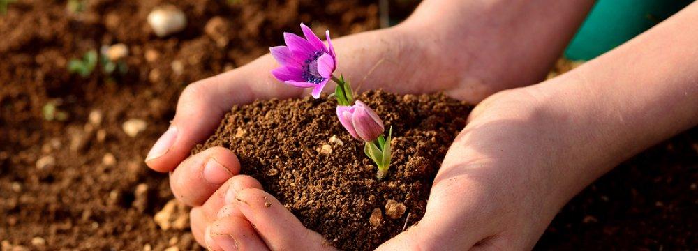 Threats to Soil Productivity Jeopardize Food Security