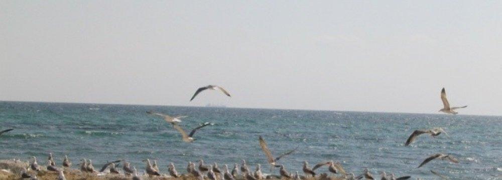 Kish Not Polluting Persian Gulf