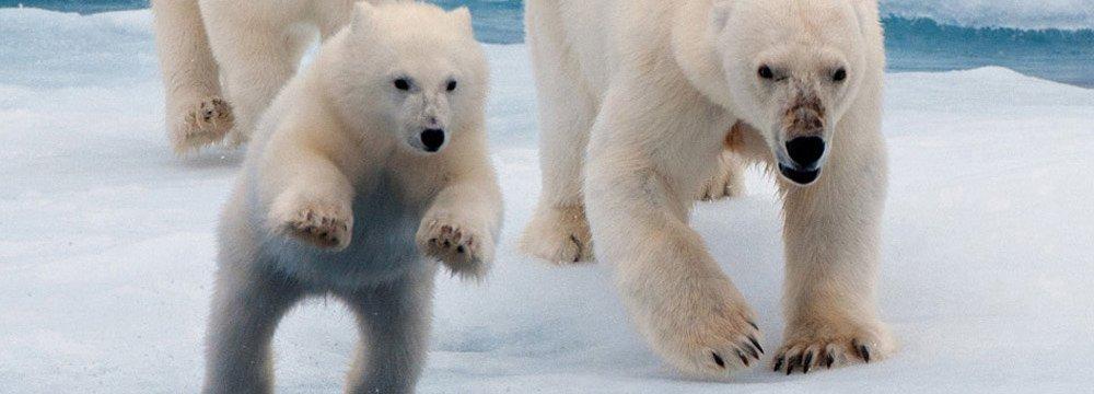 Accelerating Extinction Risk