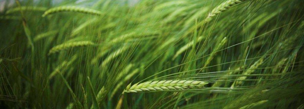 Ukraine  Agro Exports Worth $7.7b