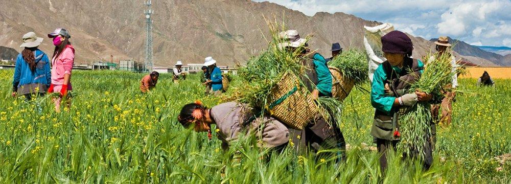 Tibet Can't Kick Subsidy Habit