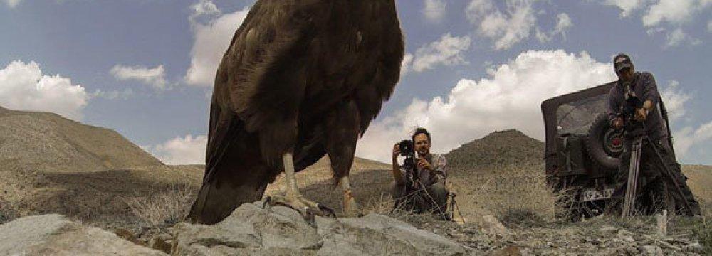 'Strangelove's Hands' on Wildlife