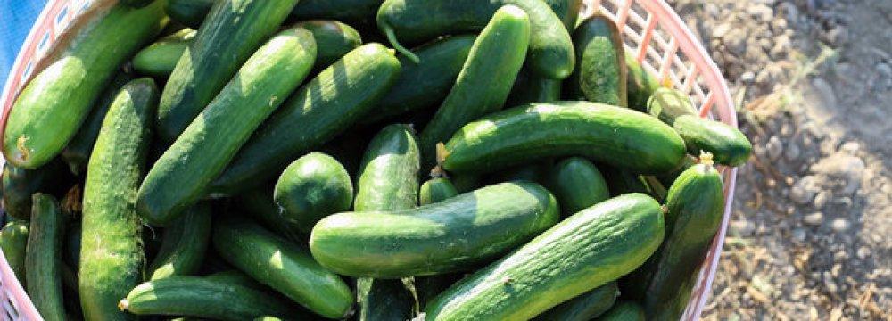 Yazd: Iran's Cucumber Production Hub