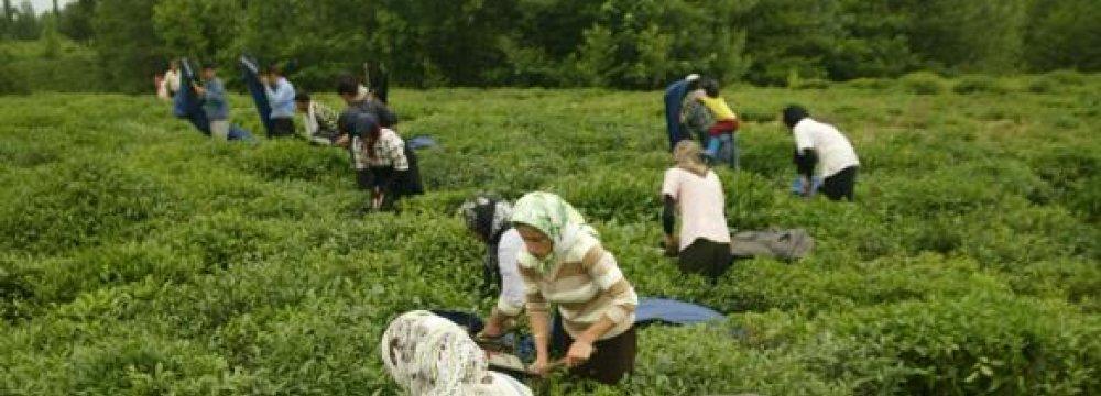 Iran's Agro Trade Deficit Narrows