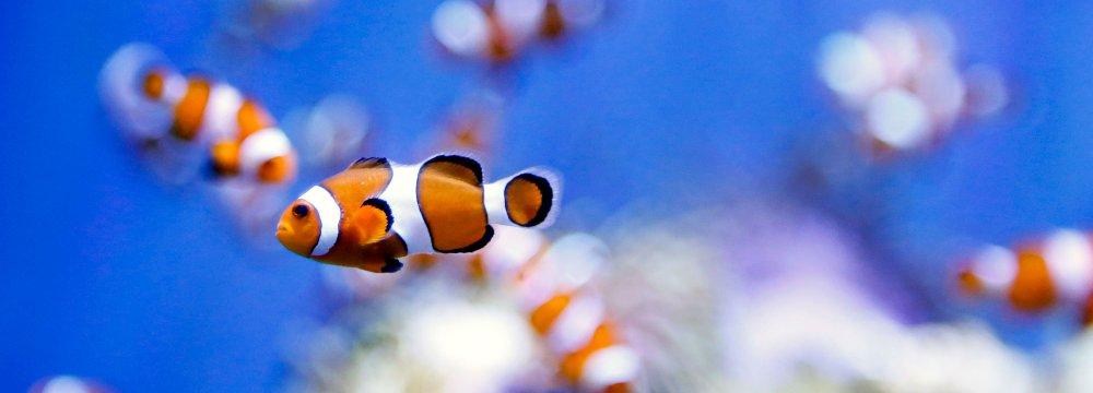 Markazi Exports Ornamental Fish