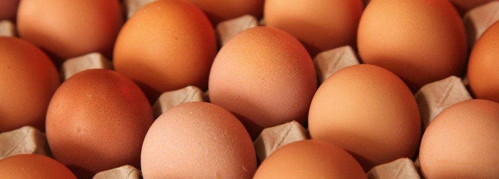 Qatar Seeks to Import Iranian Chicken Eggs
