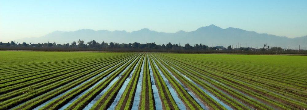 90% of Iran's Farmlands Irrigated