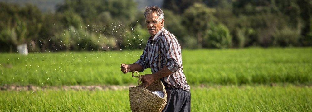 Agriculture accounts for 20% of all jobs in Iran on average.