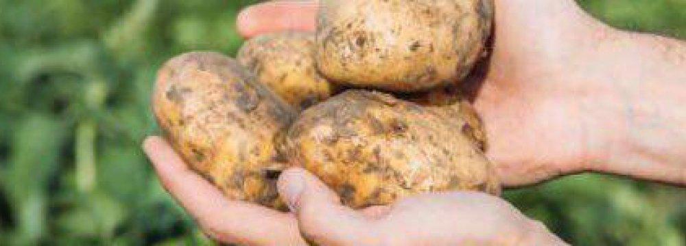 Holland-Iran Potato Seminar Convenes