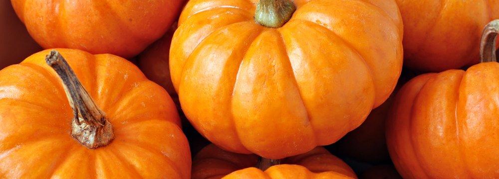 Pumpkin Exports Earn Over $2m