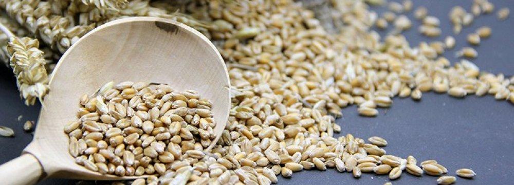 USDA: Iran Barley Production Falls Nearly 10%