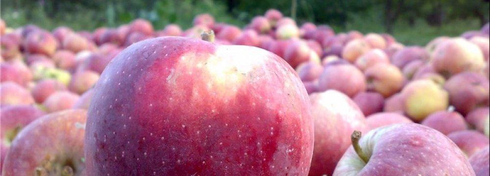 W. Azarbaijan Daily Apple Export at 3,000 Tons