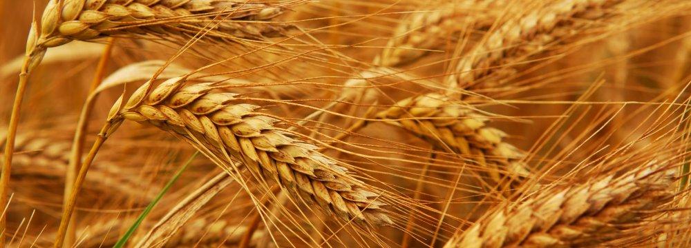 Iran Wheat Reserves Hit 12m Tons