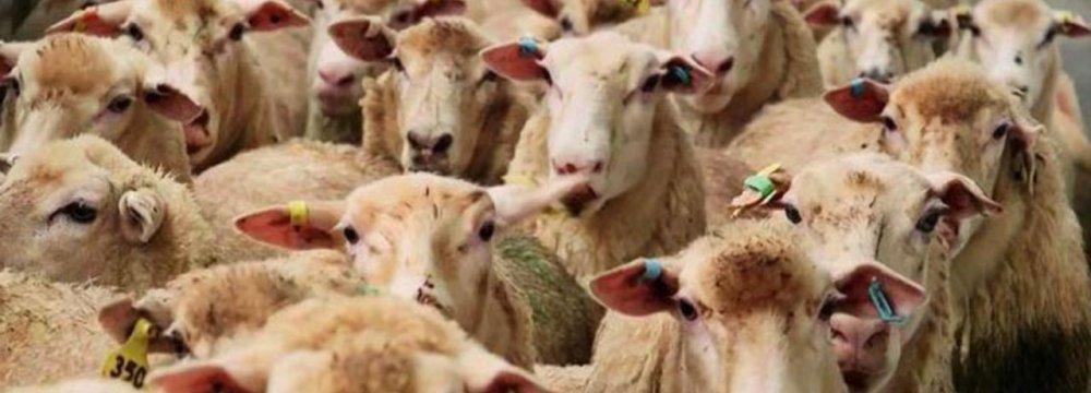 SCI Conducts Livestock Head Count